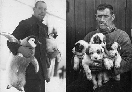 Thành viên trong đoàn đang chơi đùa với những chú chim cánh cụt con (trái) và những chú chó con sinh ra trong cuộc hành trình (phải).