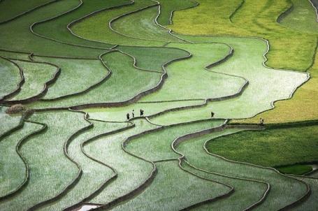 Ruộng bậc thang ở miền Bắc Việt Nam - Nguyễn Quỳnh Anh