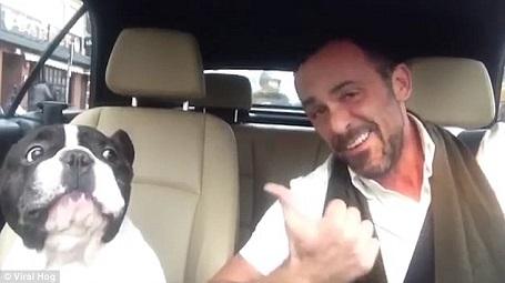 """Đoạn video ghi lại cảnh chú chó tập trung… """"hú"""" một cách rất nghiêm túc và """"chuẩn nhịp"""". Đoạn video """"song ca"""" này đã gây sốt trên mạng những ngày qua."""