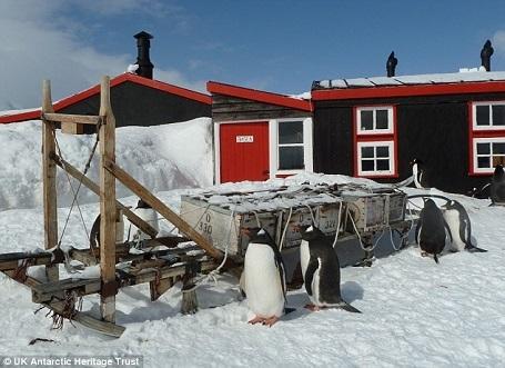 Bưu điện trên đảo Goudier vốn được biết đến với tên bưu điện Chim cánh cụt bởi trên hòn đảo này có tới 2.000 chim cánh cụt sinh sống.
