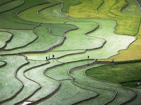Khoảnh khắc ấn tượng của nhiếp ảnh Việt Nam trên báo quốc tế 2015 - 17