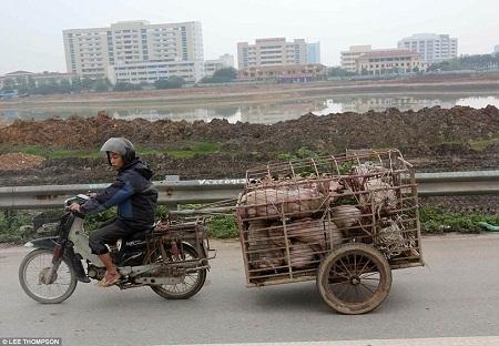 Khoảnh khắc ấn tượng của nhiếp ảnh Việt Nam trên báo quốc tế 2015 - 25