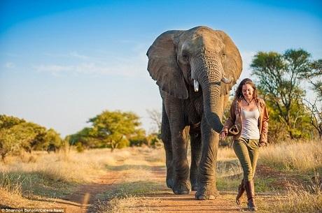 Shannon không chỉ là một nhiếp ảnh gia mà còn là một nhà động vật học khi cô có khả năng giao tiếp với muôn loài để chiếm được lòng tin và thiện cảm của chúng.