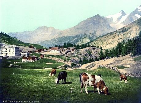 Một đồng cỏ trong dãy núi An-pơ của Thụy Sĩ.