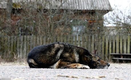 Bosy là chú chó trung thành của ông Ivan, cũng là người bạn của ông suốt bao năm nay, đặc biệt kể từ khi bà nhà ông qua đời.