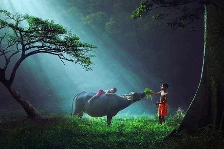 Hai cậu bé chăn trâu ở Indonesia (Ảnh: Sukron Mamun)