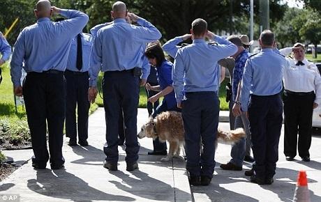 """Bretagne, chú chó thuộc dòng chó tha mồi """"retriever"""", 16 tuổi, là chú chó cứu hộ cuối cùng còn sống sót cho tới năm 2016 này sau chiến dịch tìm kiếm nạn nhân vụ khủng bố 11/9. Vào đầu tuần này, Bretagne đã được thực hiện biện pháp nhân đạo giúp chú thoát khỏi đau đớn của bệnh tật tuổi già."""
