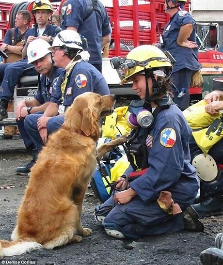 Hoạt động cứu hộ đầu tiên của Bretagne chính là trong vụ khủng bố 11/9, khi đưa Bretagne đến hiện trường, nữ cảnh sát Corliss đã lo sợ rằng mức độ thảm họa sẽ khiến chú chó bị hoảng sợ và không thể làm được việc, nhưng Bretagne đã chứng tỏ tố chất của một chú chó cứu hộ và ngay lập tức hoạt động rất hiệu quả.