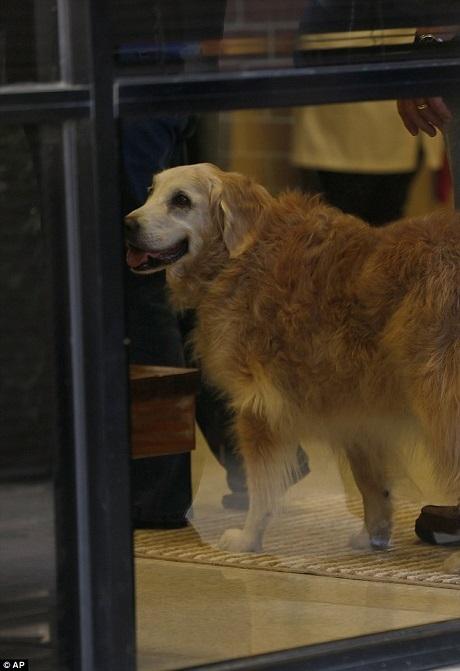 Bretagne đã bắt đầu bị suy thận và bỏ ăn, đối với những chú chó cứu hộ nhà nghề, đó chính là thời điểm để nói lời chia tay.