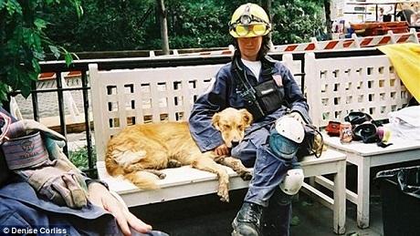 Khi thực hiện nhiệm vụ cứu hộ trong vụ khủng bố 11/9, Bretagne mới 2 tuổi và là lần đầu tiên chú được ra hiện trường, Bretagne đã hoạt động rất tích cực bất kể mệt mỏi.