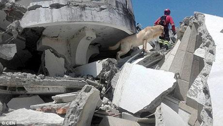 Chú chó 4 tuổi thuộc dòng Labrador là một thành viên trong đội cứu hộ. Dayko làm nhiệm vụ đánh hơi tìm ra người còn sống sót sau trận động đất vừa xảy ra ở thị trấn miền biển Pedernales, Ecuador.