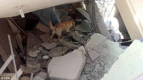 Dayko là một chú chó nghiệp vụ nhà nghề, đã được huấn luyện bài bản và nhận được cả những giấy chứng nhận đảm bảo về khả năng tham gia chiến dịch cứu nạn.