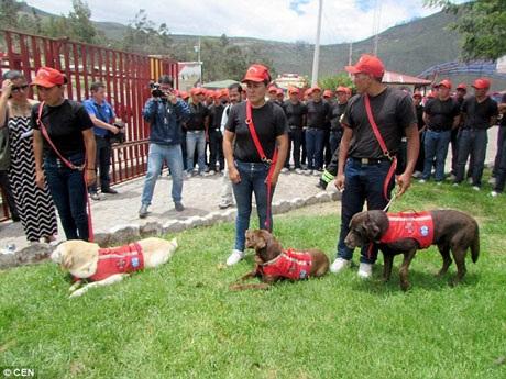 Lễ tang của Dayko đã được tổ chức trọng thể bởi chú đã hy sinh vì thực hiện nhiệm vụ. Nhiều nhân viên cứu hộ và cả chó nghiệp vụ đã đến tiễn đưa Dayko.