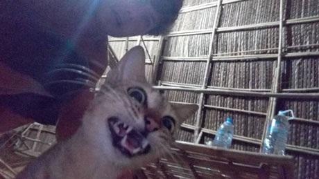 """""""Mèo già là điềm may phải không? Dù cho trông nó điên như thế này?""""."""