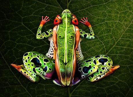 Năm 2015, Johannes từng sử dụng 5 người mẫu để tạo thành một chú ếch xanh nhiệt đới.
