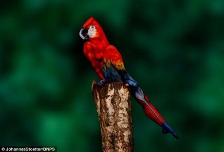 Tác phẩm chú vẹt body-painting được tạo hình từ một người mẫu nữ.