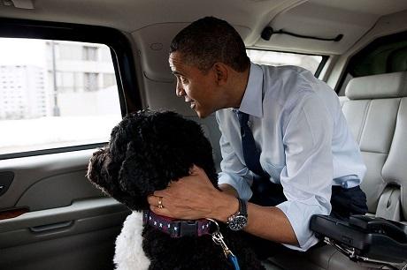 Ông Obama đưa chú chó Bo đi sắm đồ dùng dành cho cún cưng.