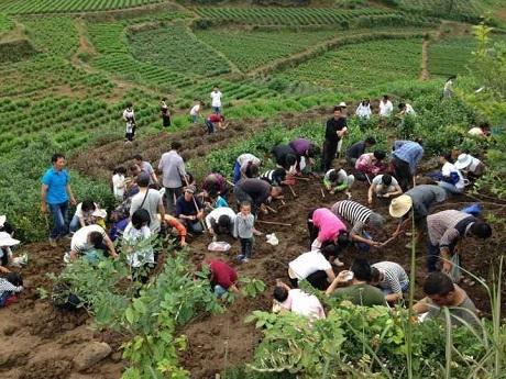 Hàng ngàn người háo hức mang cuốc xẻng đến làng Hậu Trang đào đất ngày đêm. Giờ đây, bất cứ chỗ nào chưa được trải bê tông, hễ cứ… hở đất ra là thấy có người đang mải miết đào.