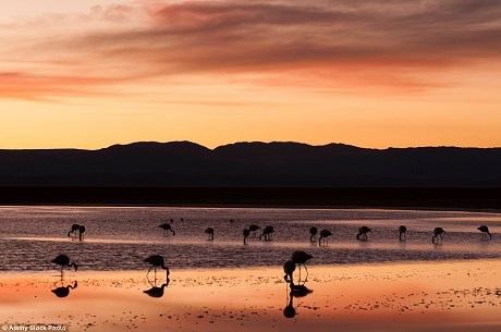 Sa mạc Atacama của Chile là một vùng rộng lớn, ở đây có khu bảo tồn quốc gia Los Flamencos. Du khách sẽ tìm thấy một hồ nước lớn, nơi đây là nhà của rất nhiều chim hồng hạc. Nước trong hồ là nước mặn, khi ánh chiều bắt đầu phủ xuống, mặt hồ tĩnh lặng như mặt gương phản chiếu toàn bộ bầu trời rực rỡ lúc cuối ngày.