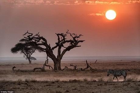 """Ngược lại, đến với một chuyến du lịch safari trong rừng già Kenya đem lại cho du khách trải nghiệm đích thực về những điều cốt lõi, vĩnh hằng nhất của hành tinh và sự sống, cảnh vật trải dài tít tắp, ngút tầm mắt, chỉ có cây cối thảng hoặc """"chen ngang"""" tầm nhìn."""