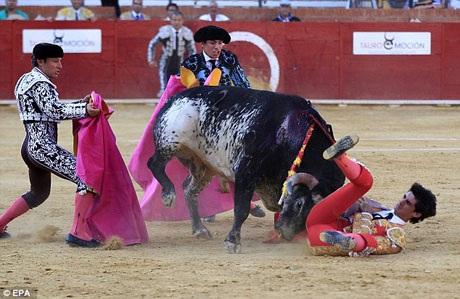Sự việc hiện đang gây chấn động truyền thông và công chúng Tây Ban Nha bởi kể từ khi bước sang thế kỷ 21, chưa có một người đấu bò chuyên nghiệp nào của nước này thiệt mạng trên sân đấu.
