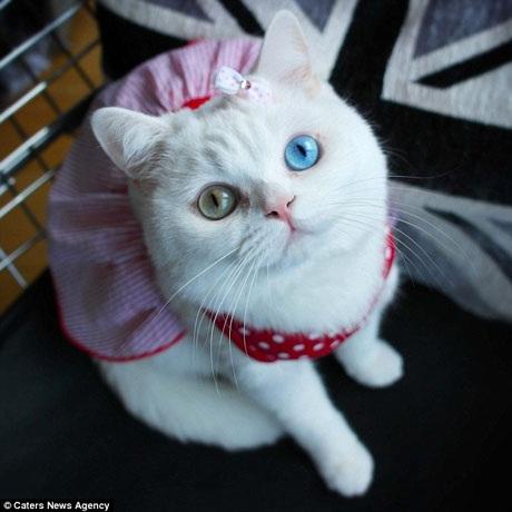 """Trước khi trở nên """"đắt sô"""" chụp hình, Starina đã gây sốt trên mạng xã hội bởi đôi mắt đặc biệt."""