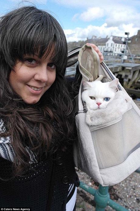 Cô mèo Starina rất được chủ cưng chiều bởi hiện tại Starina rất đắt sô chụp hình.
