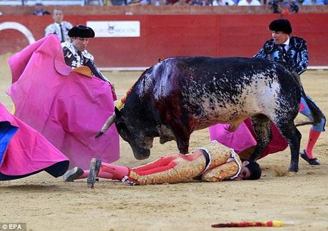 Những người đấu bò khác đã nhanh chóng chạy lại khống chế bò tót Lorenzo nhưng đã quá muộn, Barrio đã bị trúng đòn chí mạng.