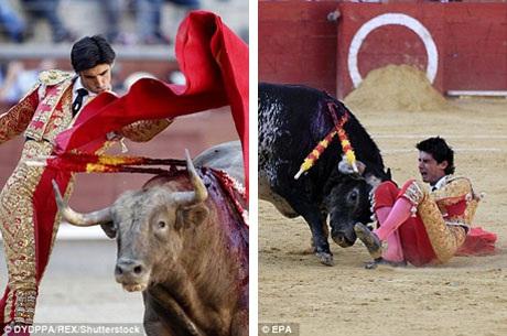 """Trong các trận đấu bò của mình, anh Bario thường lựa chọn trang phục màu đỏ tươi và vàng ánh kim, trong giới đấu bò, bộ trang phục mang hai màu này thường được mệnh danh là """"bộ lễ phục của ánh sáng""""."""