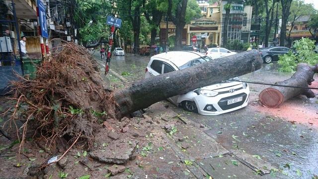 Bão số 1 đang quật đổ gần 700 cây xanh trên địa bàn Hà Nội (Ảnh: Nguyễn Dương).