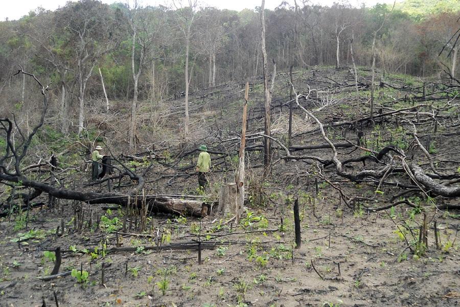 Hàng ngàn ha rừng tại Đắk Nông đã bị tàn phá