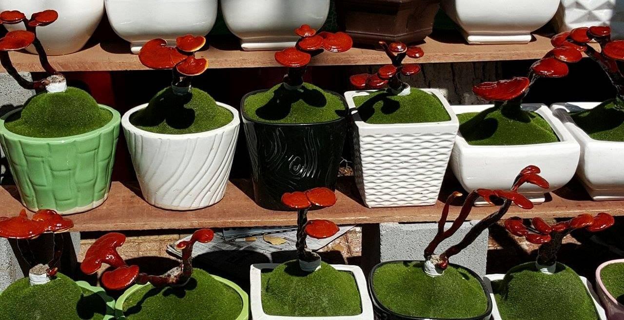 Linh chi bonsai độc đáo giá từ 400 ngàn - 1,2 triệu đồng/bình