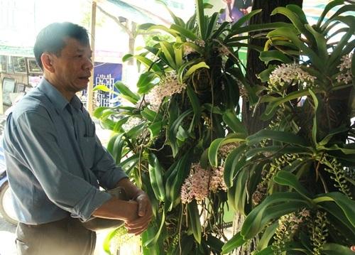 Rất đông khách hàng hỏi mua lan rừng dù giá không hề rẻ.