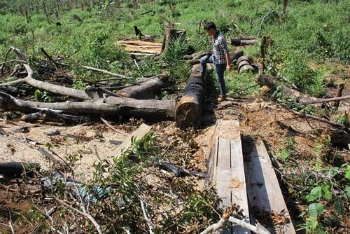 Nạn phá rừng làm nương rẫy liên tục diễn ra