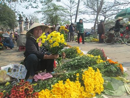 Hoa cúc Tết nở muộn, dân cắt đi bán rằm để bù lỗ - 1