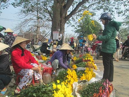 Người dân Huế cắt hoa cúc vàng Tết nở muộn ra bán ở các chợ với giá rẻ bèo dịp rằm Nguyên Tiêu này