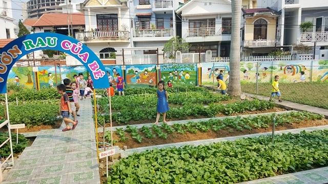 Tinh khiết vườn rau sạch trong trường mầm non cho trẻ ăn an toàn - 2
