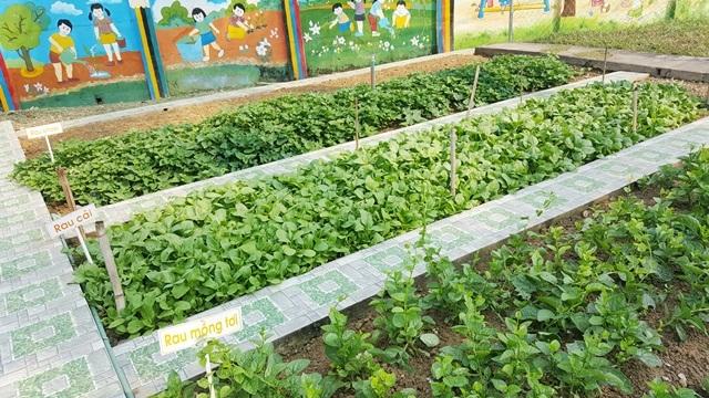 Rau mồng tơi, rau cải và rau khoai tươi xanh, không có hóa chất độc hại