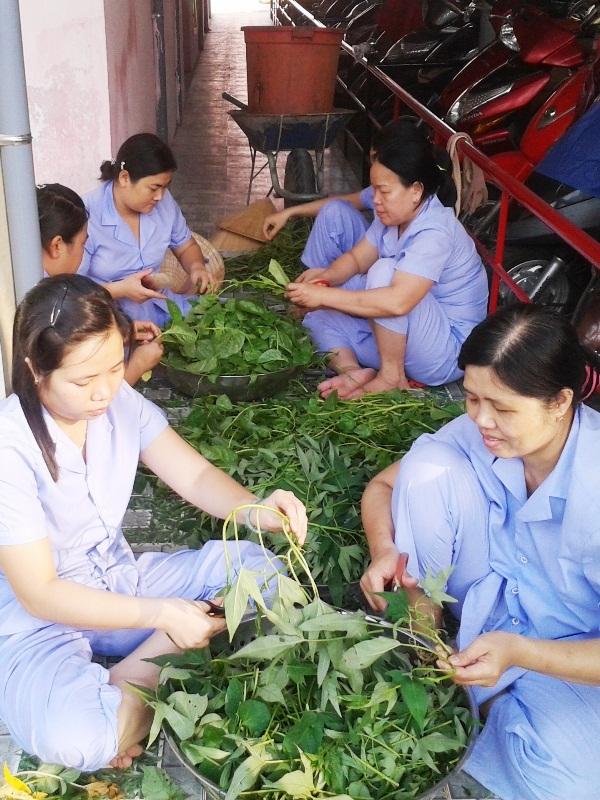 Các bảo mẫu đang nhặt rau vườn vừa cắt để chế biến cho bữa ăn của bé