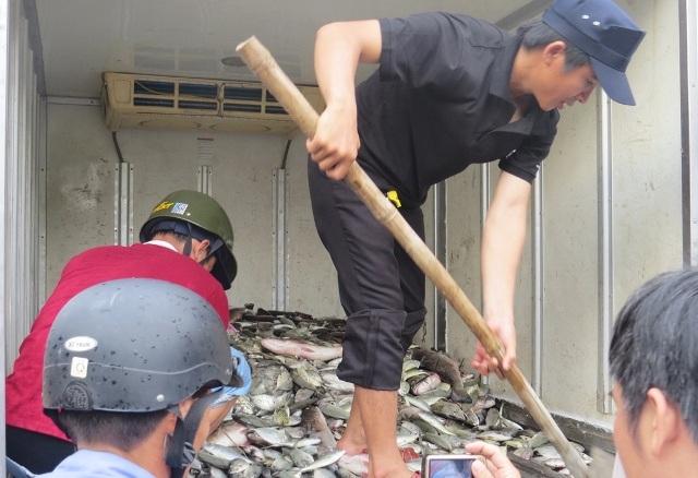 Xúc cá chết để chuẩn bị cho vào hố tiêu hủy ở Thuận An