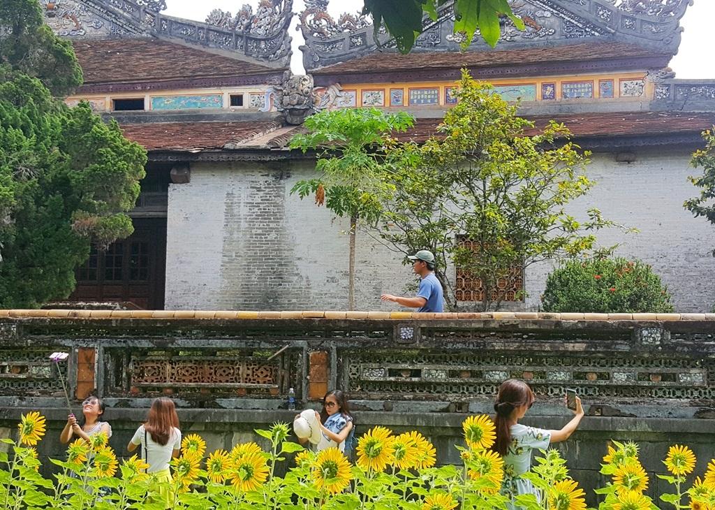 Vườn hoa hướng dương mới bên điện Thái Hòa được các nữ sinh thích thú chụp ảnh selfie
