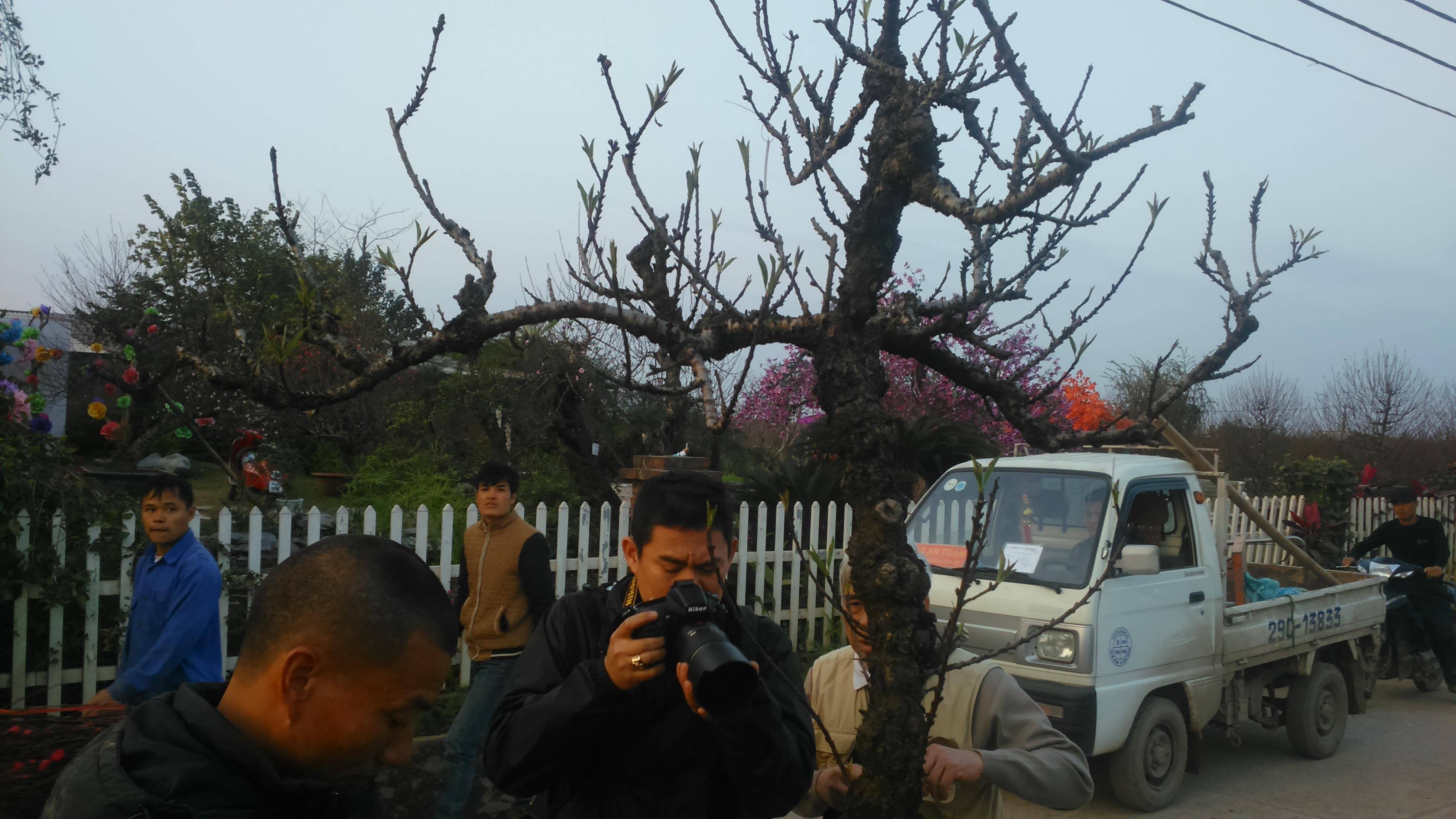 Trong buổi sáng, rất nhiều cây đào tiến vua giá chục triệu được xuất vườn cho đại gia chơi Tết. Rất nhiều thợ nhiếp ảnh, phóng viên đã đến vườn đào tiền tỷ để chụp cận cảnh những cây đào độc, lạ