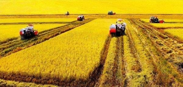 ĐBSCL nổi tiếng là vựa lúa của Việt Nam