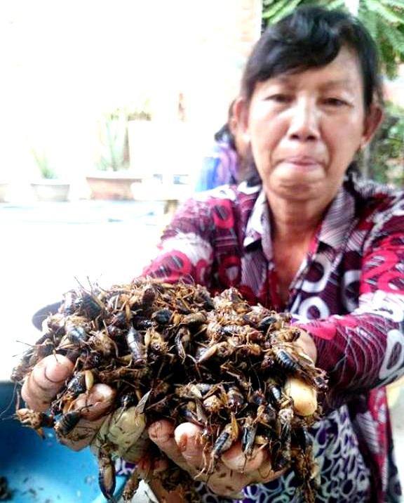 Một công nhân thu hoạch dế