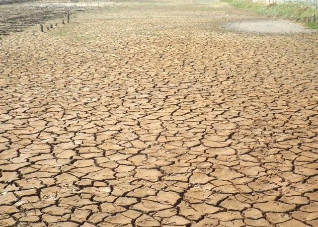 ĐBSCL thời gian qua chịu tác động của biến đổi khí hậu, hạn hán kéo dài ruộng đồng nứt nẻ