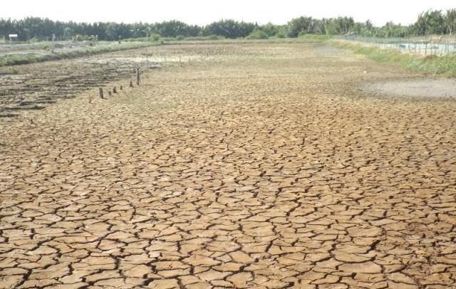 Hạn hán, xâm nhập mặn khiến đồng ruộng ở các tỉnh ĐBSCL khô nứt, nẻ