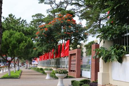 Một số cơ quan nhà nước ở Gia Lai cũng trồng cây sò đo cam trong khuôn viên trụ sở.
