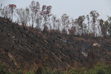 Rừng hết cây to, cây nhỏ sẽ bị đốt cháy để làm rẫy như thế này
