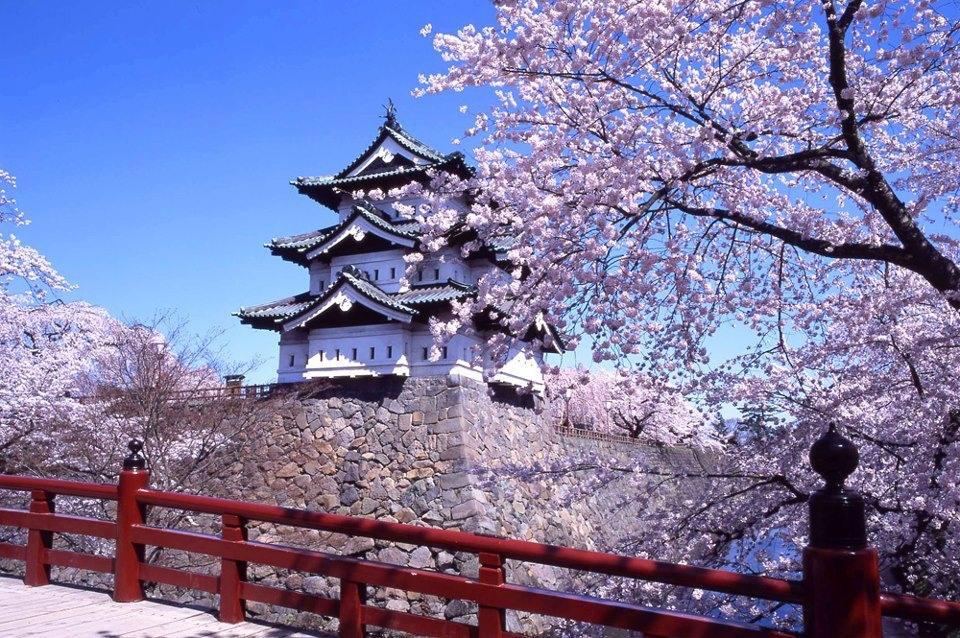 5 suất học bổng toàn phần tại Nhật Bản - 1