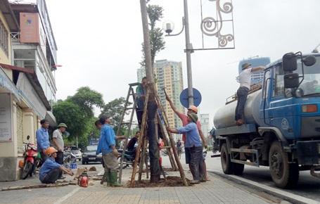 Công nhân trồng cây lát hoa thay thế gỗ mỡ trên đường Nguyễn Chí Thanh